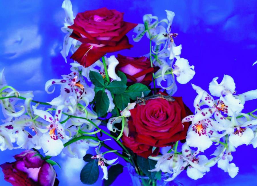 nobuyoshi-araki_fotografia-della-serie-flowers_-credits-nobuyoshi-araki-courtesy-galleria-carla-sozzani-milano