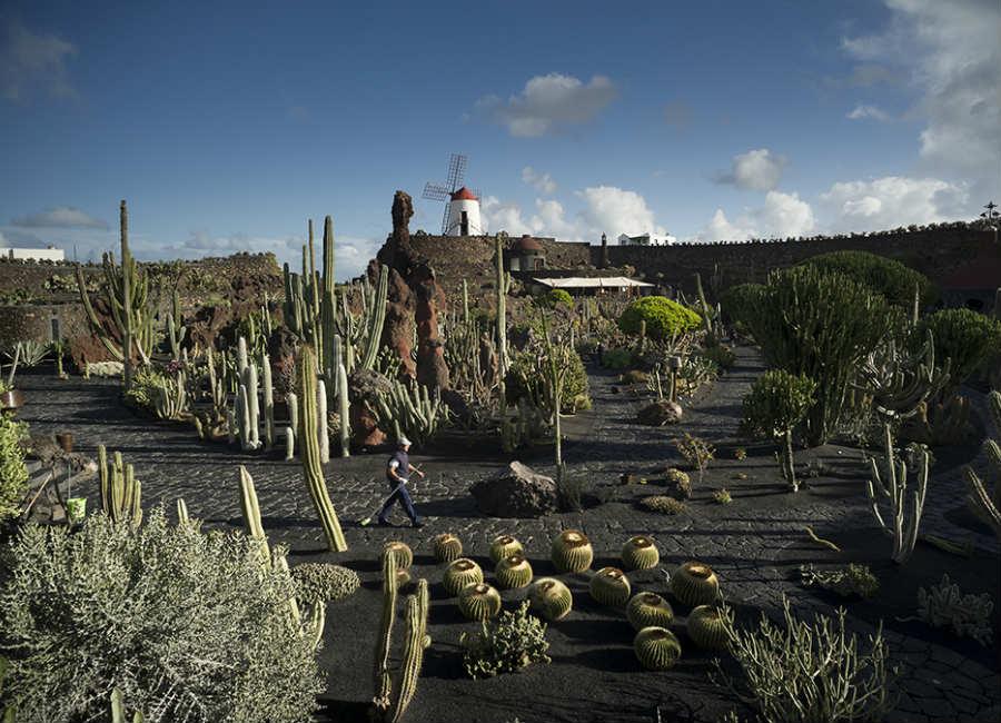 Carlo Scarpa per il Giardino-2017-Jardin de Cactus_1
