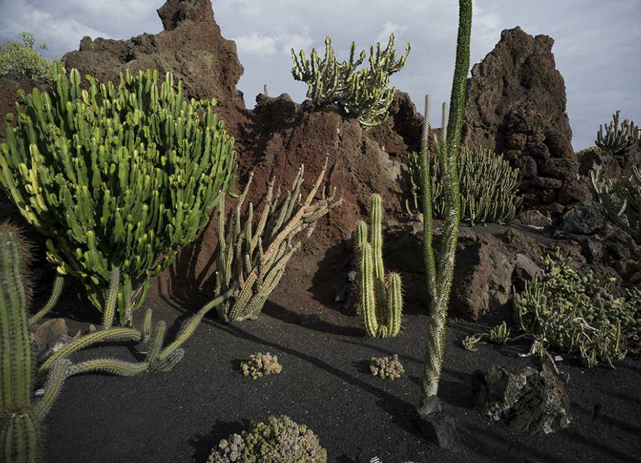 Carlo Scarpa per il Giardino-2017-Jardin de Cactus_5