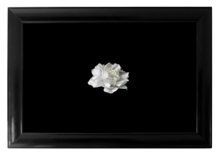MIA Photo Fair-Vittorio Gui-Flower Z-2016 Photo diasec, 196x136 cm compresa di cornice , parte integrante dell'opera, Edizione: 2 di 3, Courtesy: Vittorio Gui