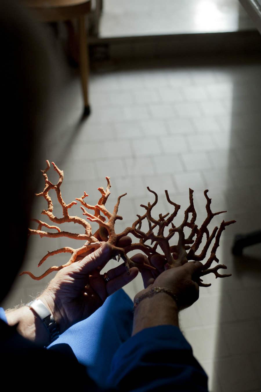 Enzo Liverino - ramo di corallo