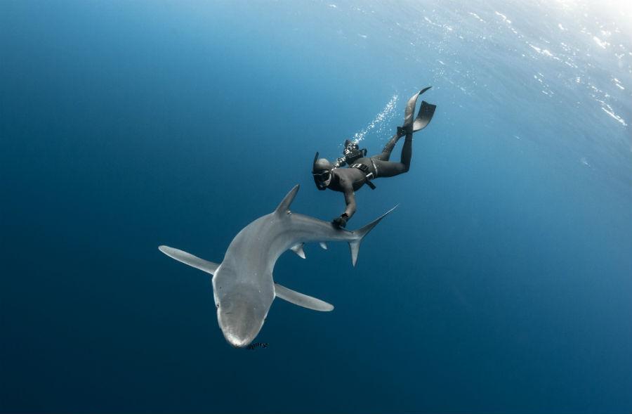 L'apneista e fotografo subacqueo Frederic Buyle che, in partnership con Ulysse Nardin, porta al polso durante le immersioni il Diver Deep Dive.