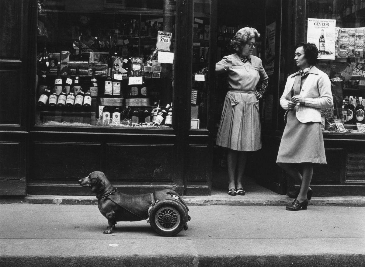 Robert Doisneau, Un chien à roulettes, 1977 @ Atelier Robert Doisneau