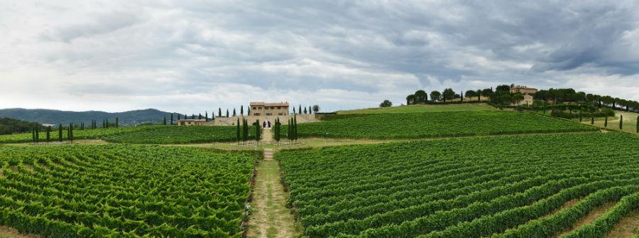 Brunello Cucinelli - Nell'immagine le vigne di Solomeo