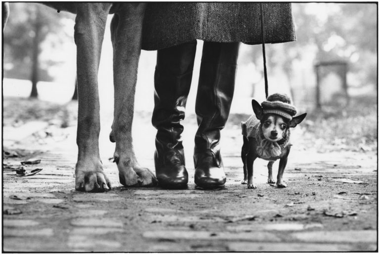 Elliott Erwitt in mostra a Pavia con Icons: nell'immagine USA. New York. 1974 © Elliott Erwitt/MAGNUM PHOTOS, due cani con al centro una donna