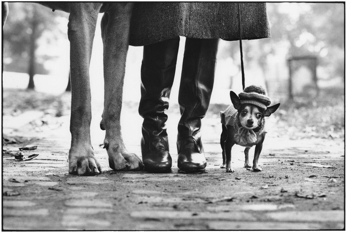 Elliott Erwitt in mostra a Pavia con Icons: nell'immagine USA. New York. 1974 © Elliott Erwitt/MAGNUM PHOTOS, due cani con al centro una donna