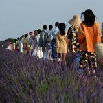 Natura ribelle. Trend alert della Spring Summer 2020