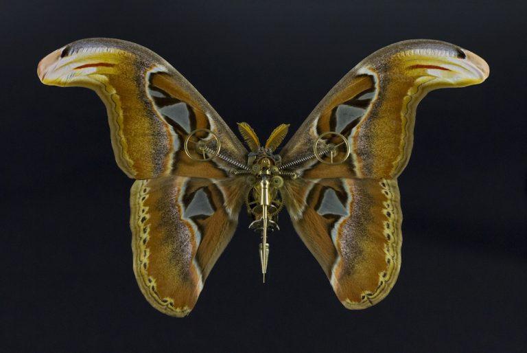 Meccanica orologiera, rivisitata. L'entomologia secondo Gaby Wormann.
