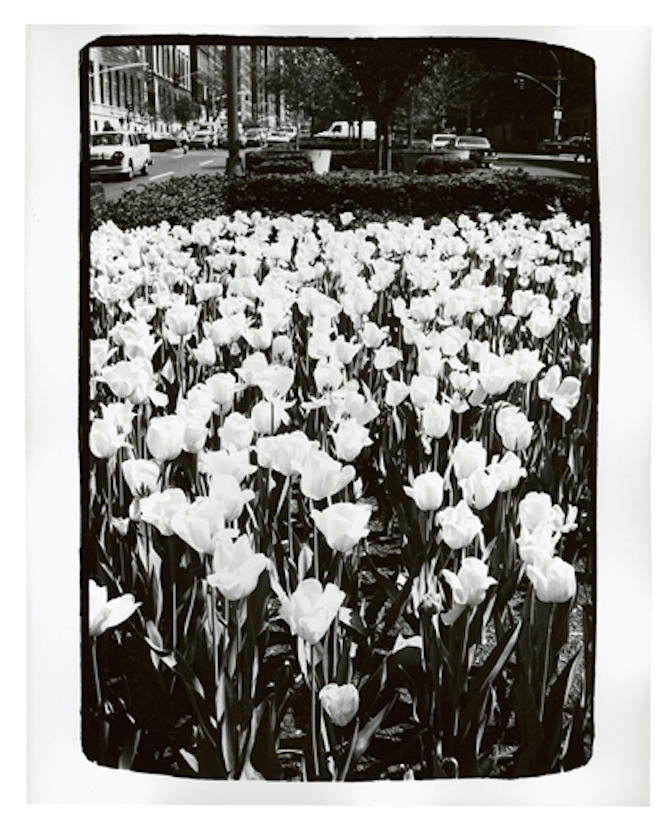 ANDY WARHOL (1928-1987) Park Avenue Tulips Estimate: USD 2,000 - USD 3,000 (GBP 1,585.20 - GBP 2,377.80) dated 'MAY 04 1982' (on the reverse) unique gelatin silver print 10 x 8 in. (25.4 x 20.3 cm.) Executed in 1982.