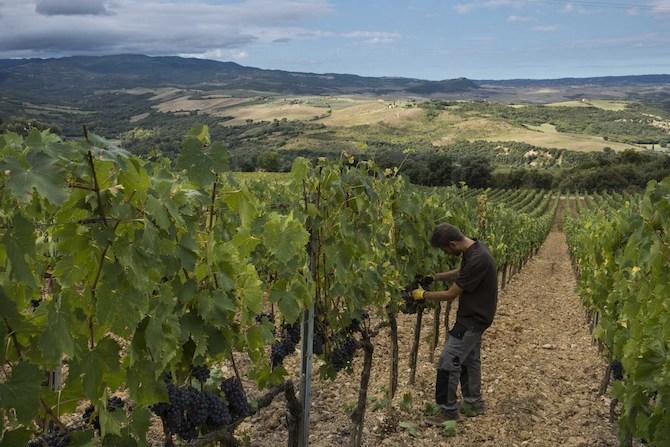 Castello di Velona Resort Thermal SPA & Winery, Montalcino (SI)