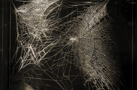 Tomás Saraceno (Argentina, 1973), Web of at‐tent(s)ion, 2020 (dettaglio) © Photography by Photography by Studio Tomás Saraceno