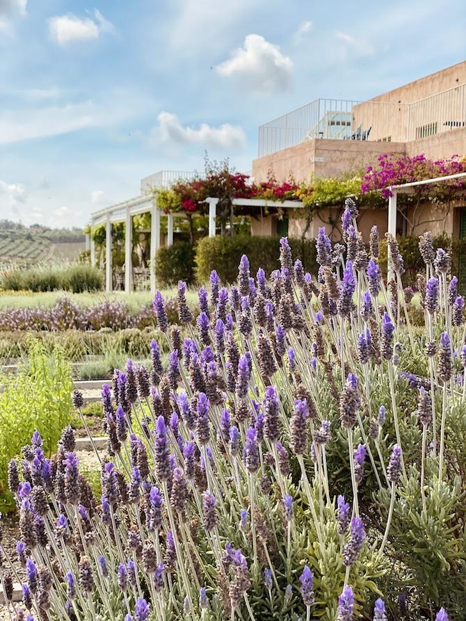 La Foresteria, il wine resort Planeta a Menfi