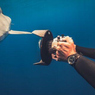 Ulysse Nardin Diver Lemon Shark: un subacqueo al servizio degli oceani